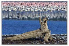 un mare di uccelli al lago...