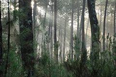Un matin dans la forêt !