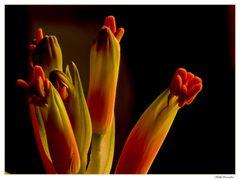..un mio fiore...