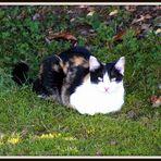 Un nouveau visiteur sur ma pelouse