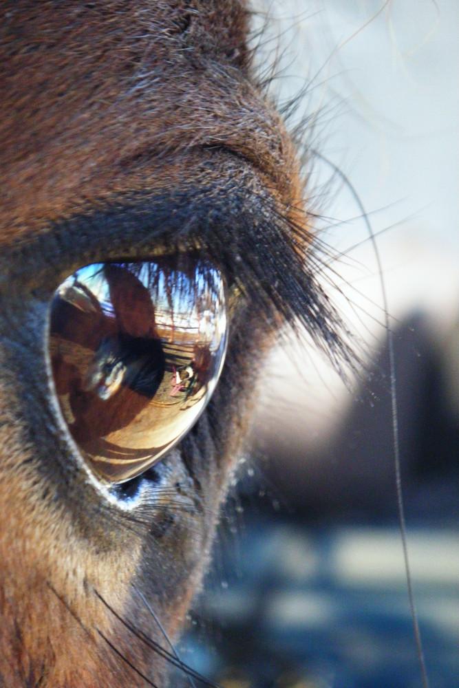 Un oeil miroir