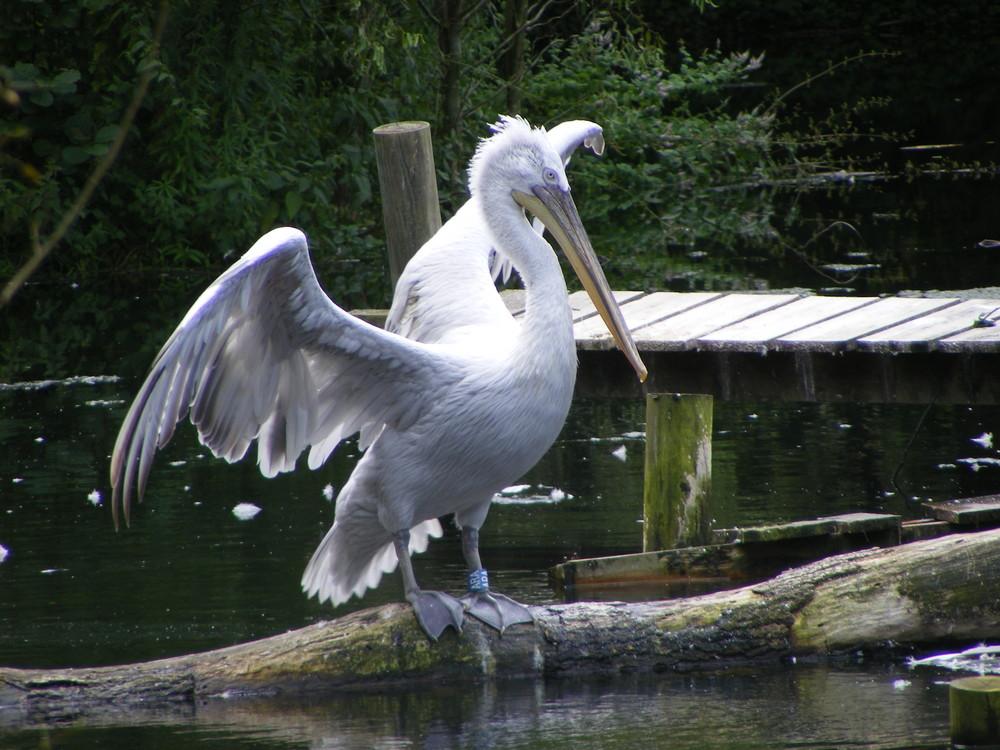 Un oiseau magestieux