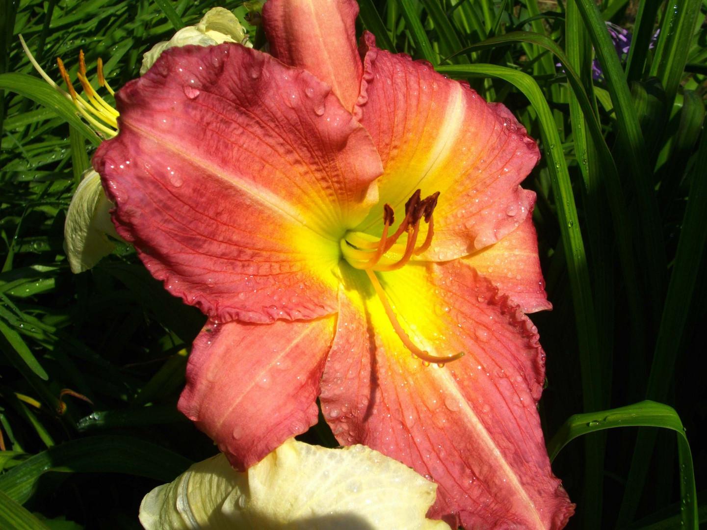 Un omaggio floreale