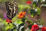 Un Pa...Pa... Papillon! *-*