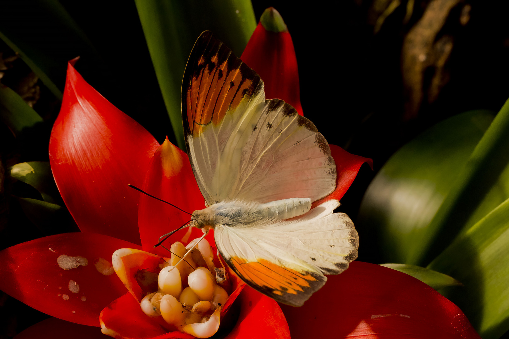 un papillon alsacien ?