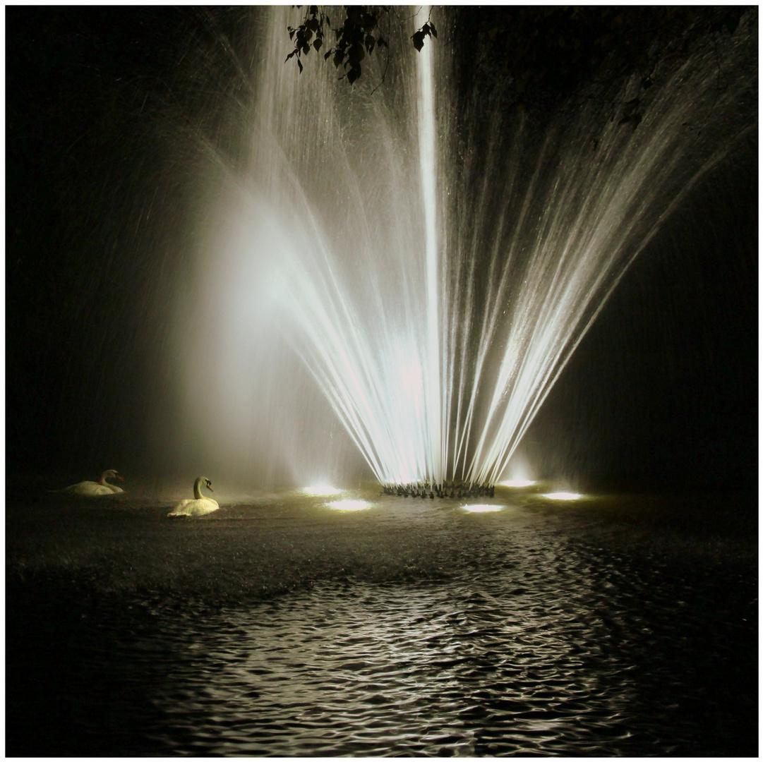 Un parc à Brugges le soir