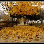 Un paseo en otoño....