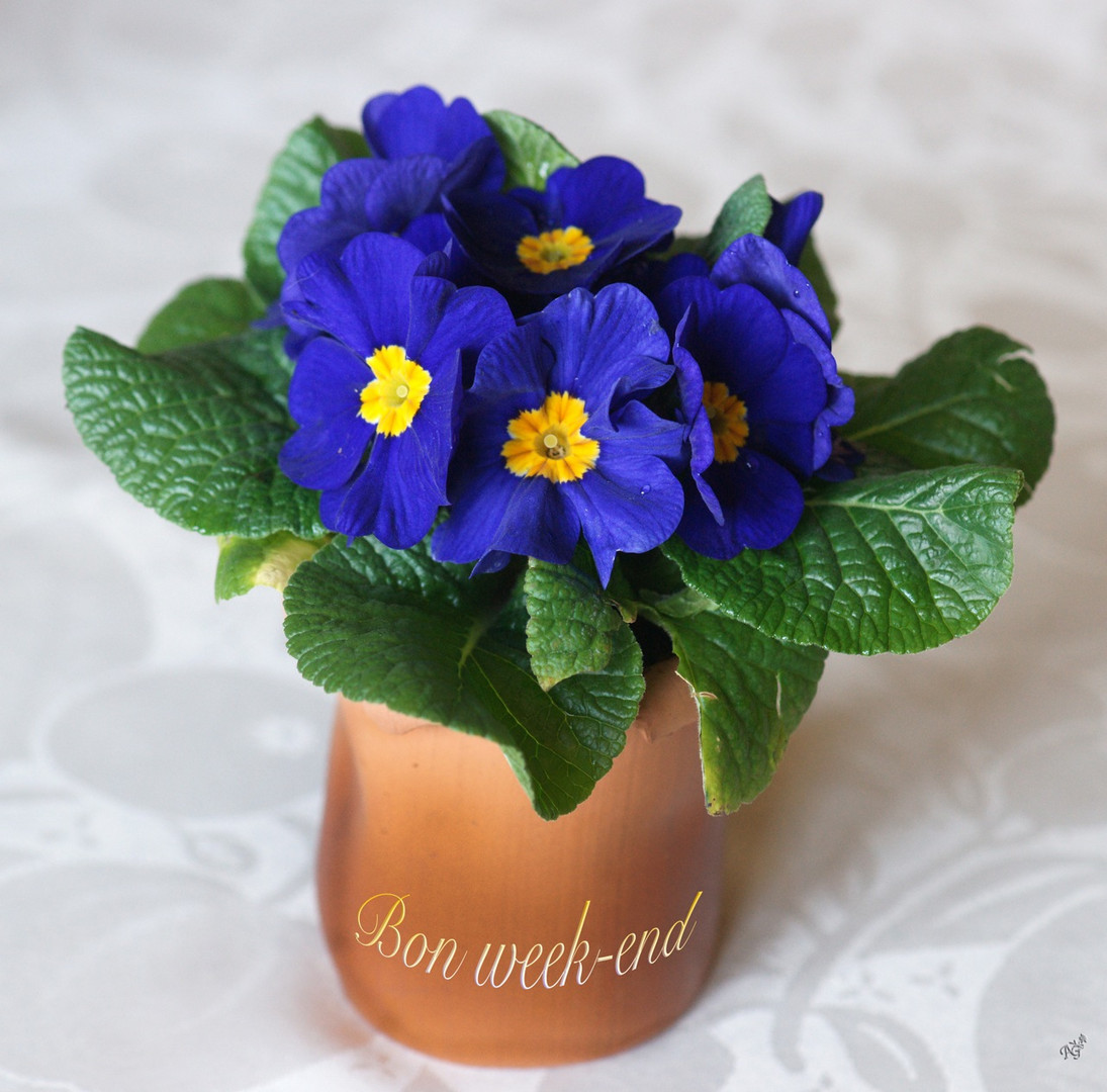 Un petit air de printemps ... pour vous souhaitez ........