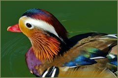 """un petit """" canard"""" de toutes  les couleurs ..."""