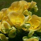 Un petit jaune ........SVP, sans trop d'eau.