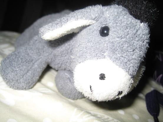 Un petit âne.