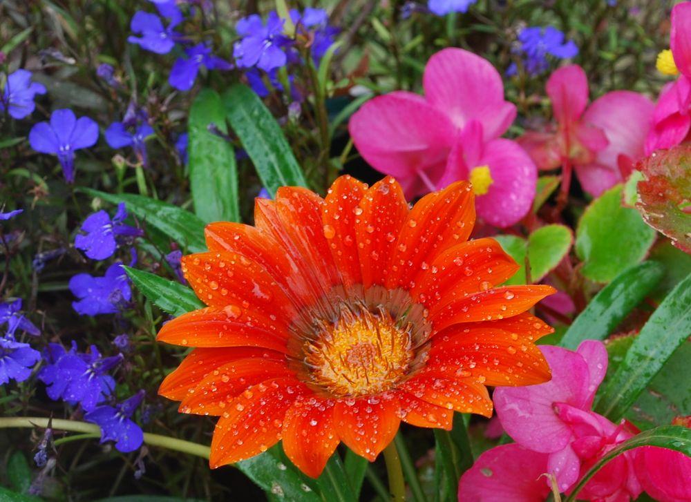 Un peu de couleur pour réchauffer vos coeurs et vous souhaiter tout le bonheur du monde...