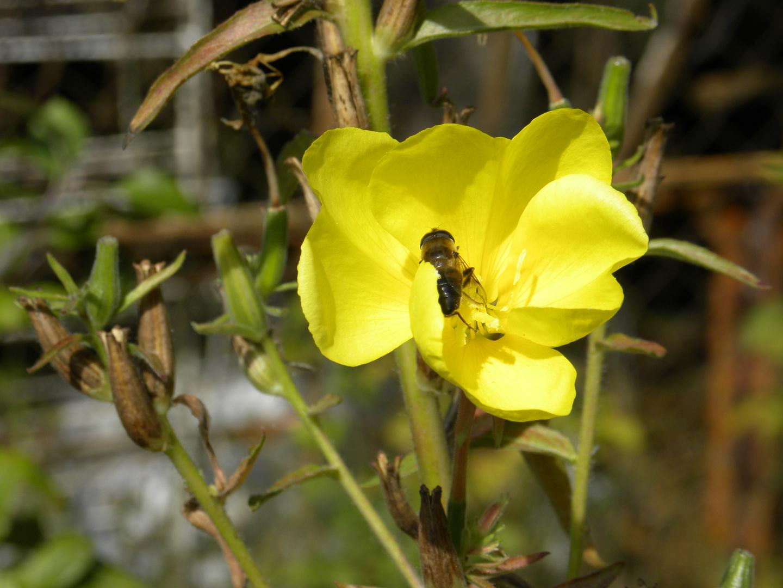 un peu de pollen ?