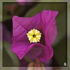 Un piccolo fiore nel cuore