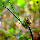 un piccolo nido per piccoli semini