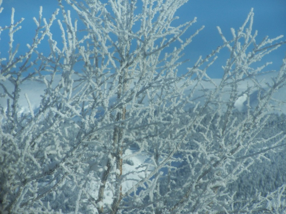 un ramo bianco