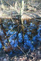 Un reflet dans la rivière
