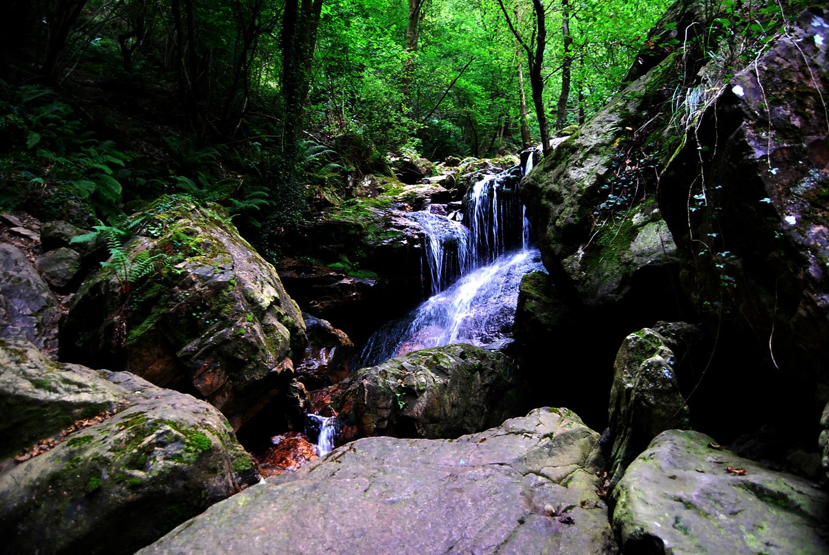 Un rincón del bosque