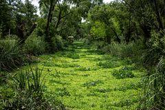 Un río de plantas acuáticas