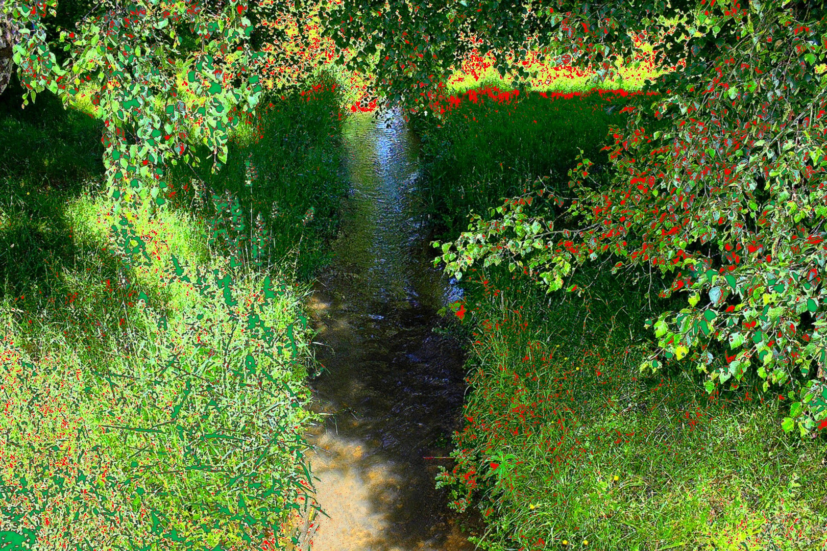 Un ruisseau à Giverny