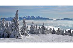Un rêve d'hiver