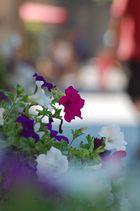 Un semplice fiore