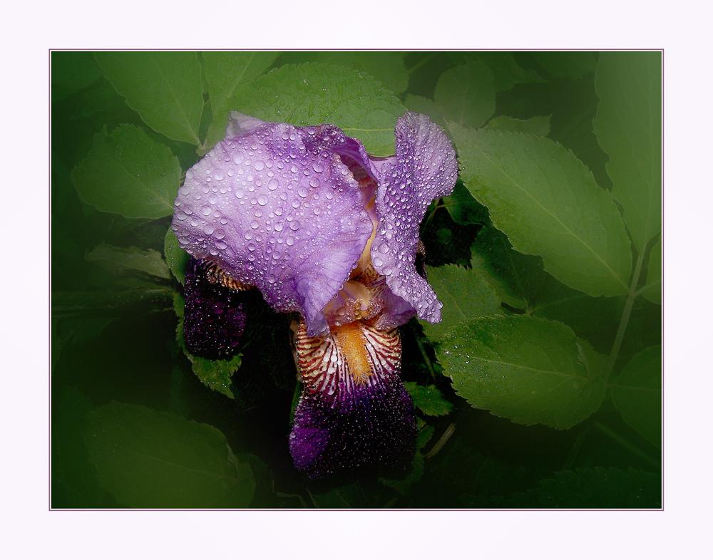 Un semplice fiore.....