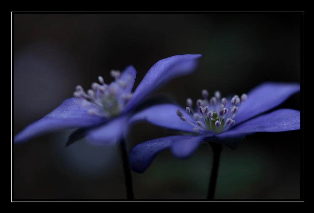un sogno in blu