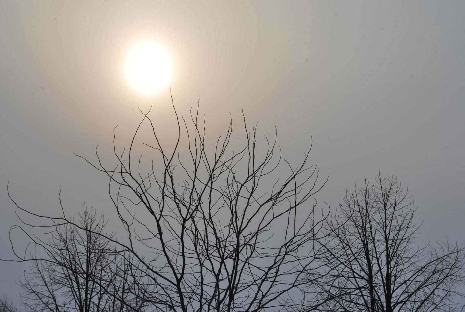 Un soleil bien timide