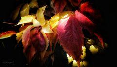 ...un sueño de otoño