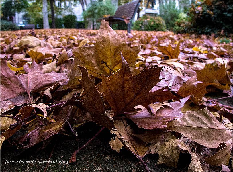 un tappeto di foglie