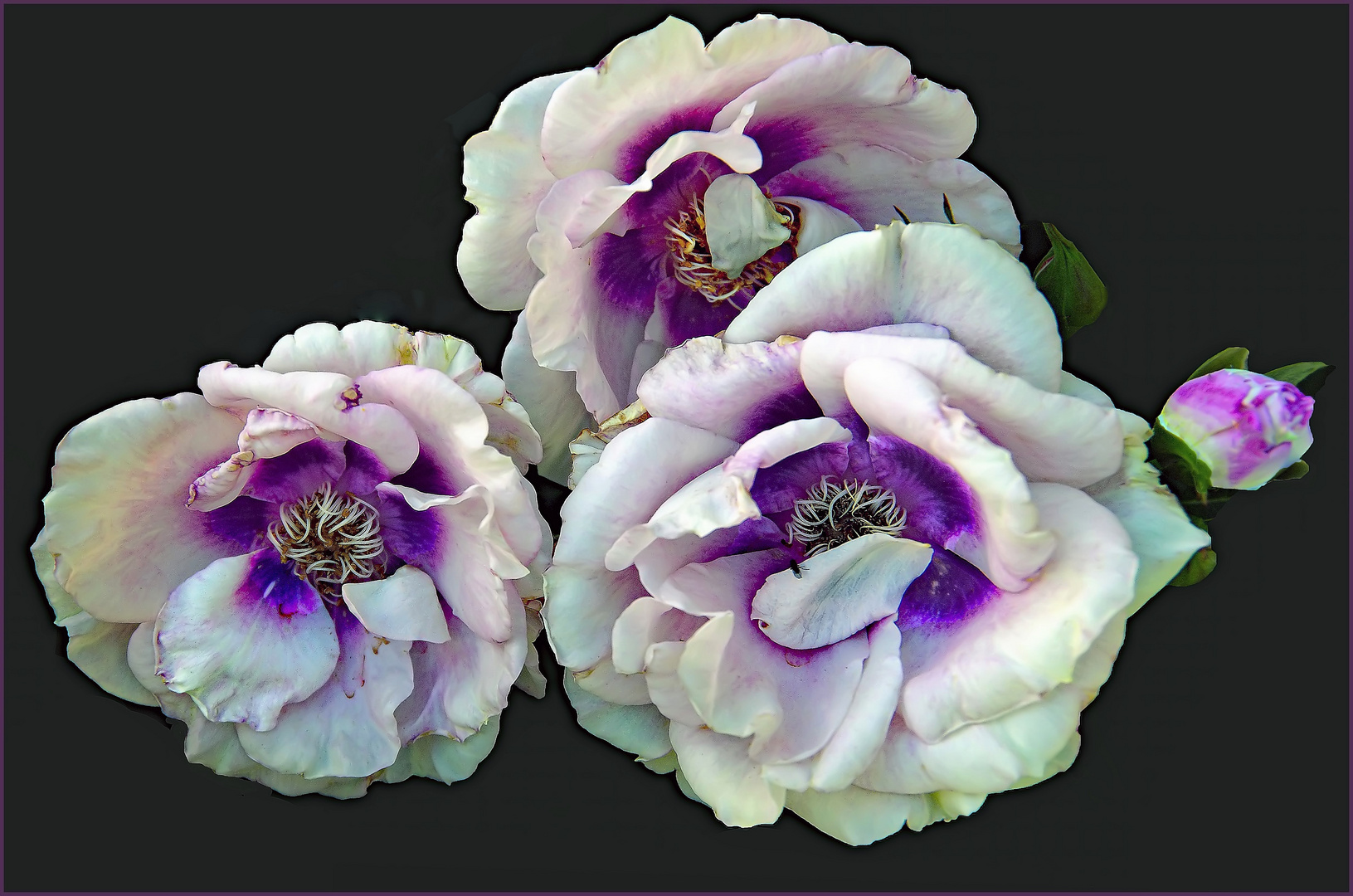 un trio au coeur violet ...