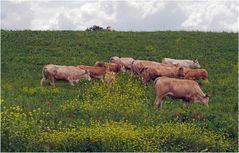 Un troupeau sous bonne surveillance