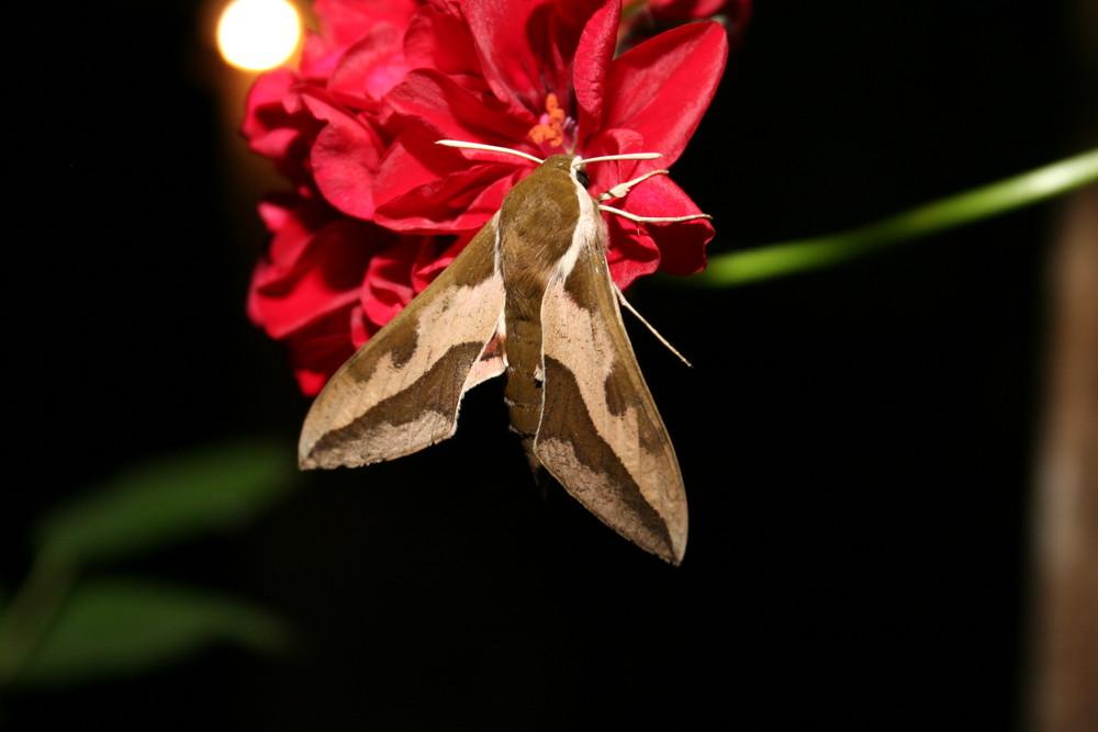 un visiteur de la nuit