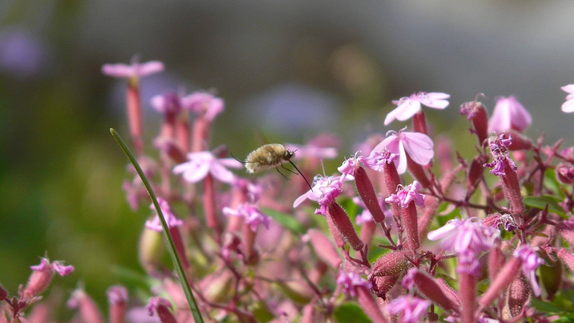 Un vol sur les fleurs.