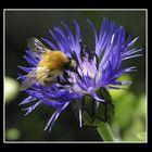 Un vrai nectar