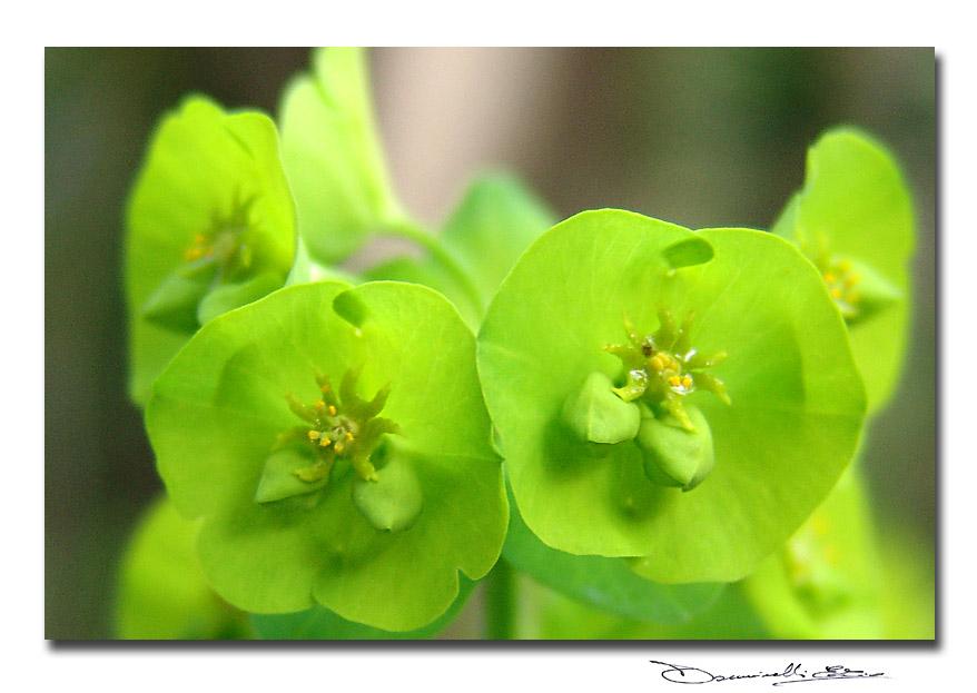 Una cartolina di piccolissimi fiori verdi