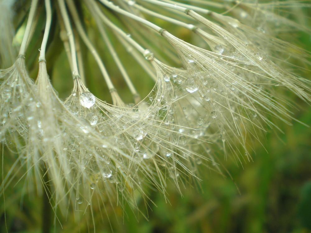 Una collana di perle di pioggia