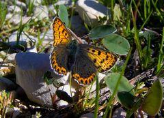 Una farfalla in mezzo al verde