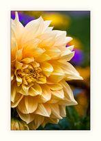 Una flor de un jardín público