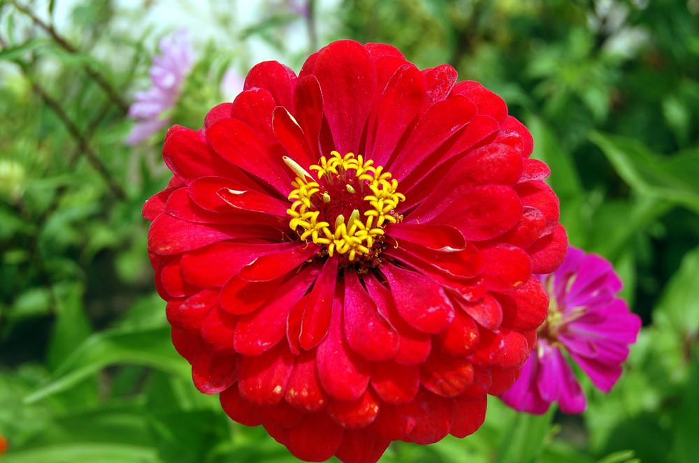 Una Flor en Primavera