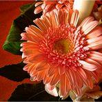 Una flor para ROSA CALVETE