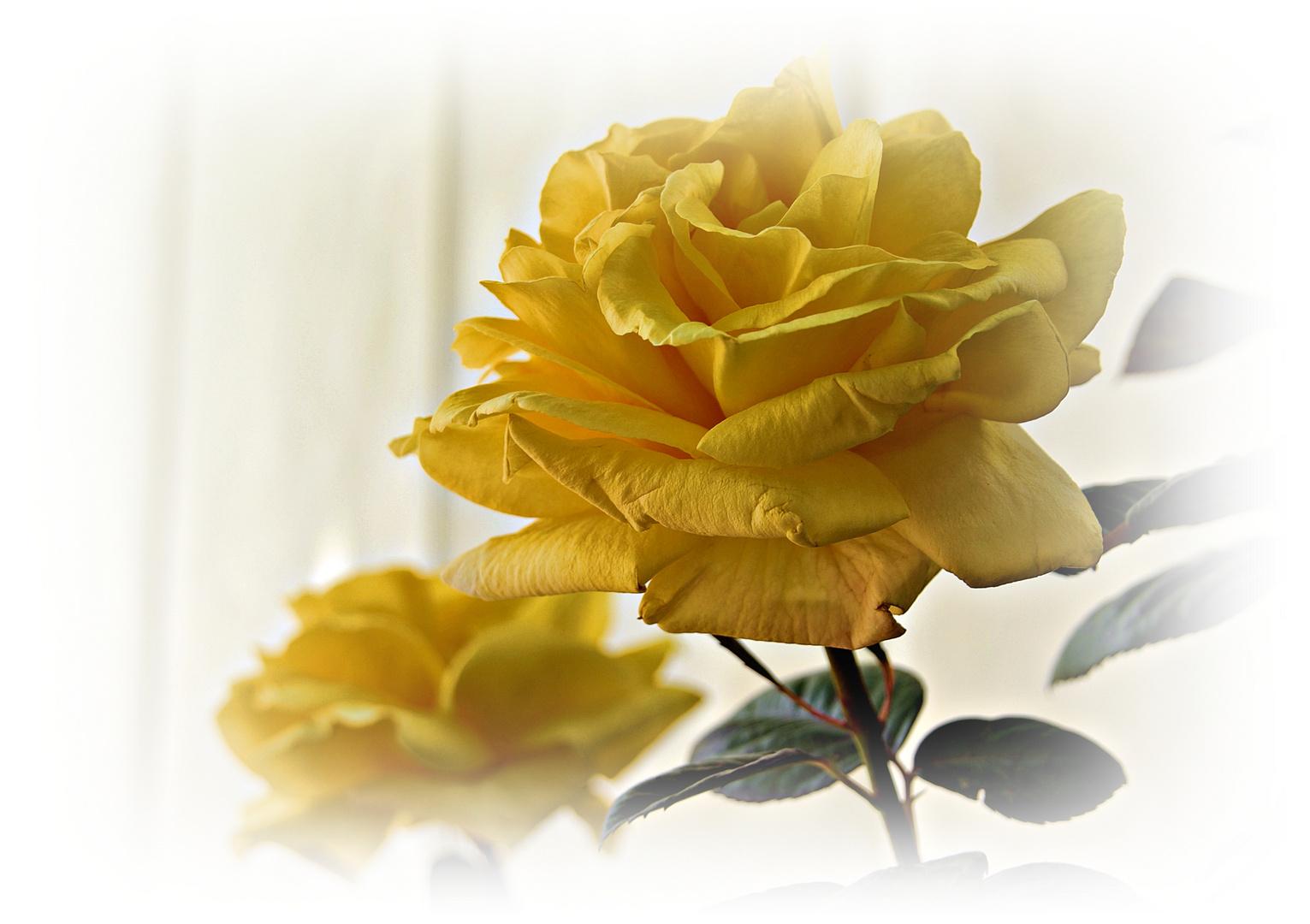 Una flor per Lolita