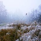 Una gelida camminata nella brughiera