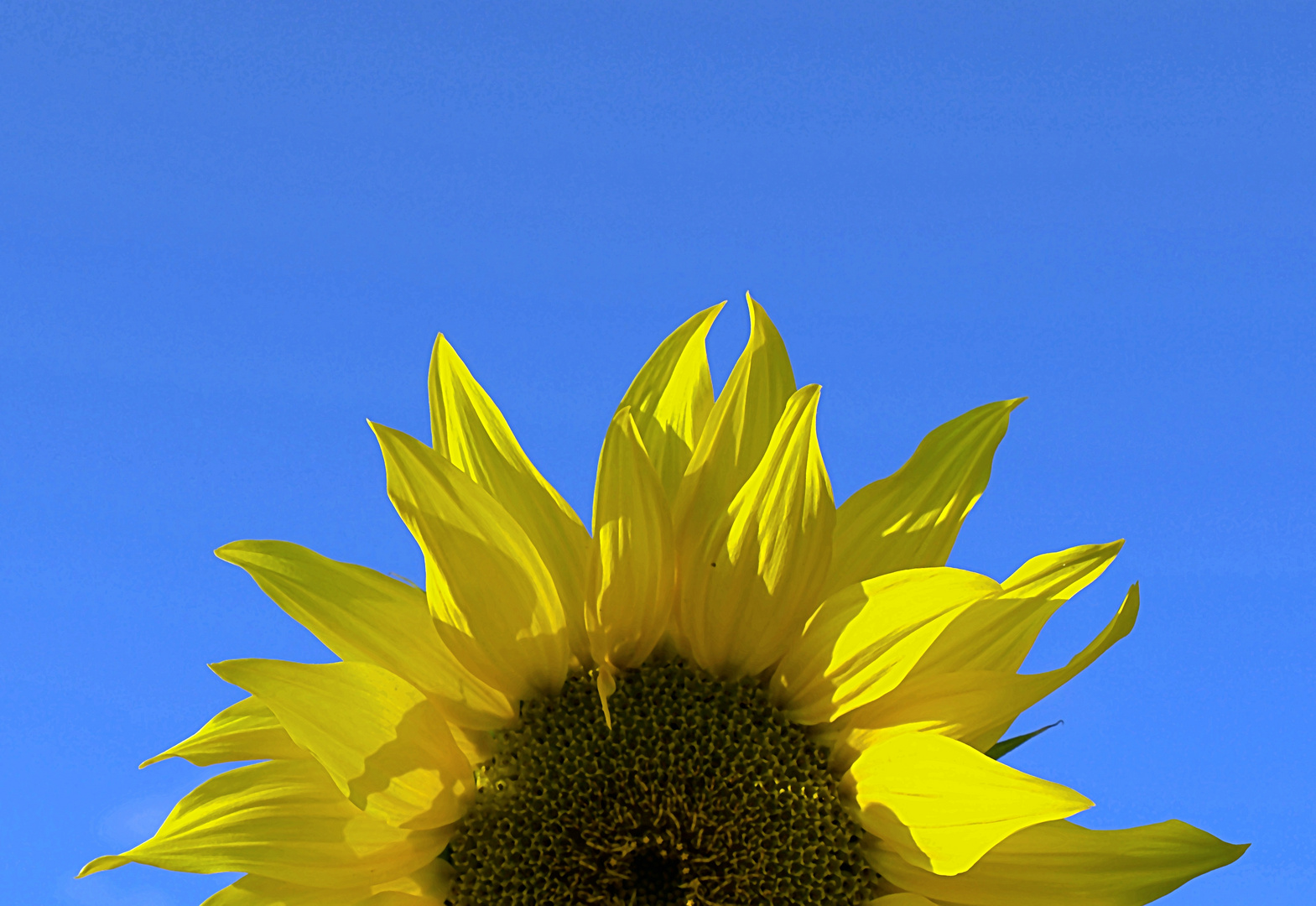 una giornata di sole a tutti!