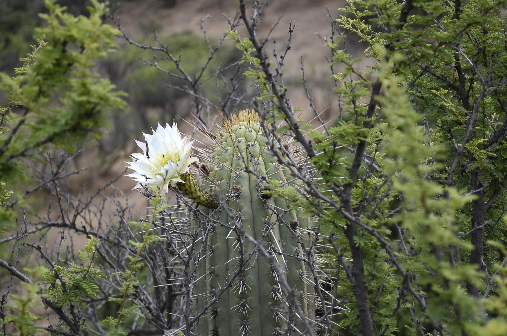 Una hermosa flor en un cactus