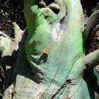una mariposa posada sobre un tronco verde