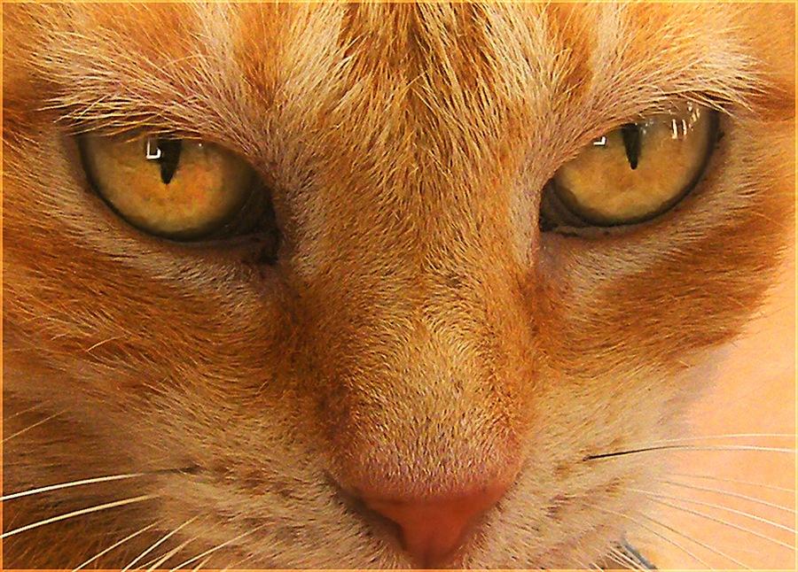 Una mirada felina