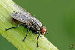 Una mosca....