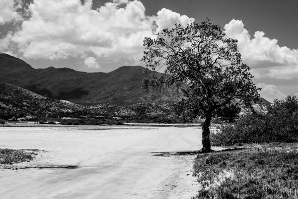 Una mundo, un árbol.